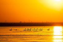 黄河故道夕阳