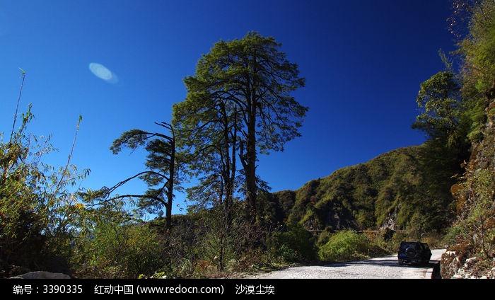 片马公路边的松树图片,高清大图_森林树林素材