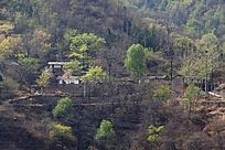山林间的村庄