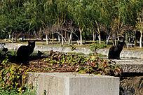 蹲在灰色石板上的两只黑色小猫