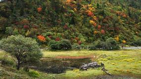 高原草甸旁的彩色树林