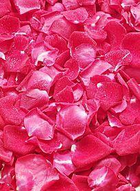红红的玫瑰花瓣图片