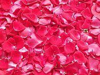 红玫瑰花瓣图片