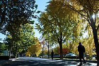 路边的秋天风景