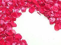 棚拍创意红玫瑰花瓣图片