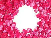 棚拍红玫瑰花瓣图片