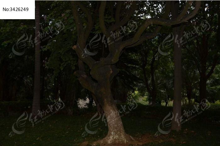 奇形树枝图片,高清大图_树木枝叶素材