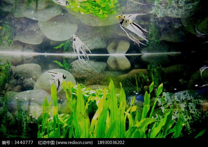 原创摄影图 动物植物 水中动物 水母鱼