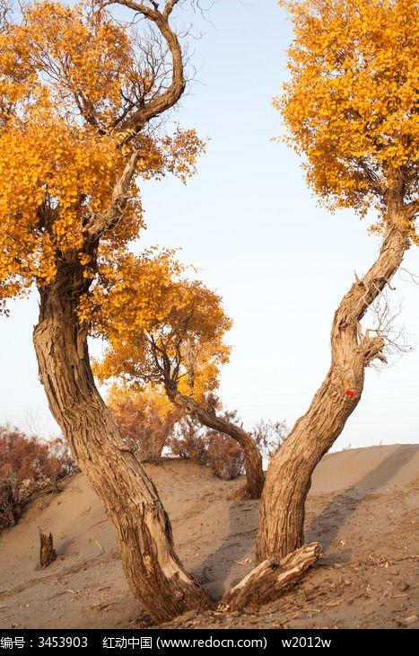 一棵奇特的胡杨树图片,高清大图_树木枝叶素材