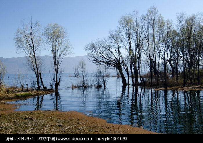 云南大理洱海树木和倒影图片