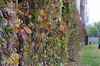 深秋的植物叶片