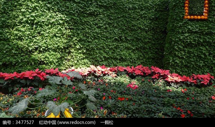 原创摄影图 动物植物 农作物 一束光线照在用蔬菜摆成的造型墙上