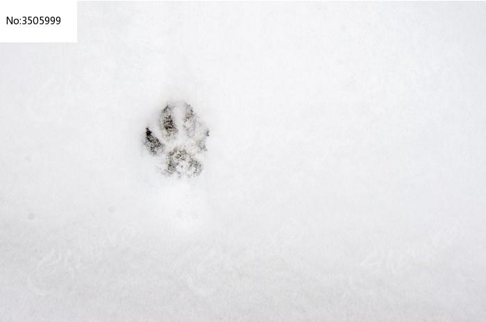 雪地里的一个狗脚印图片