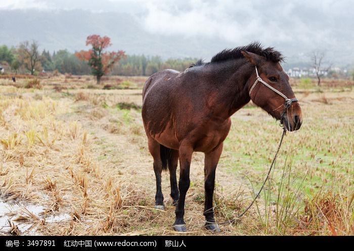 一匹马图片,高清大图_陆地动物素材