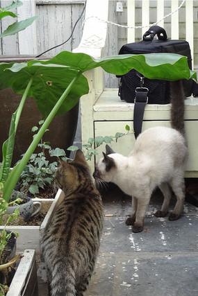 观察中的猫咪