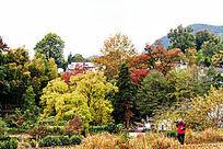 美丽的秋色