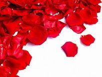 摆拍红玫瑰花瓣图片