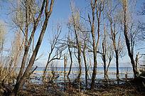 大理洱海边的一排树木