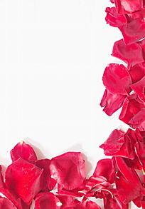 红玫瑰花瓣摆拍图片