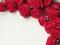 棚拍玫瑰鲜花特写图片