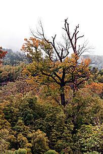 秋色的林子