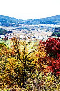 秋色的田野