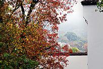 秋树与徽派民居