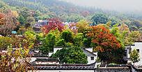 深秋的塔川红叶