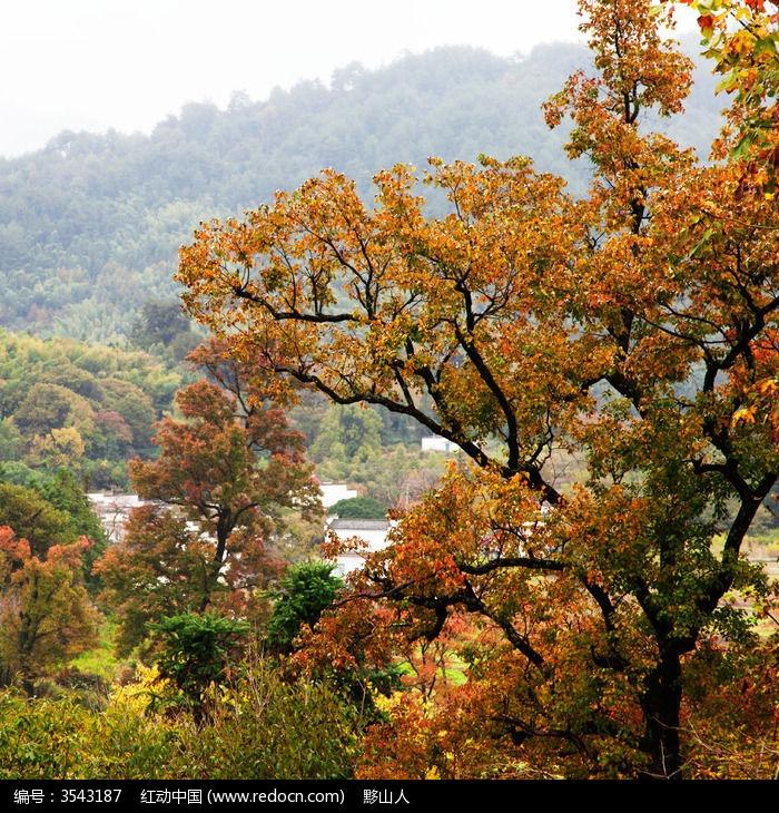 塔川乌桕树已经红了图片,高清大图_天空云彩素材