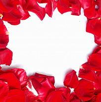 影棚摆拍红玫瑰花瓣图片