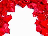 影棚摆拍红色花瓣图片