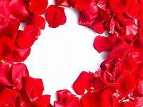 影棚拍摄红玫瑰花瓣图片