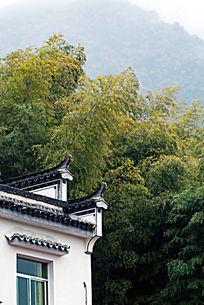 竹林与民居
