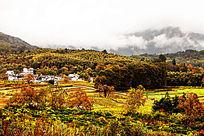 秋天的农田
