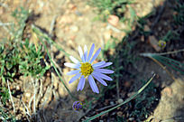 赛罕塔拉公园的野花