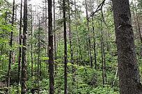 原始森林中的人造鸟巢