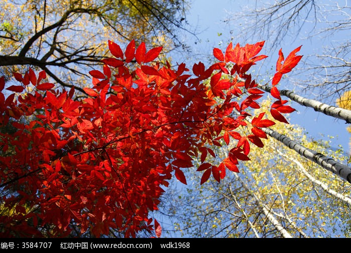 红叶图片,高清大图_森林树林素材