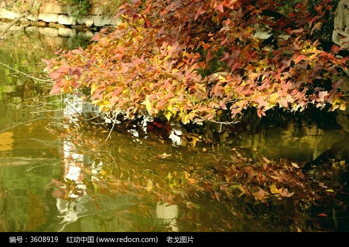 河边倒影的红树叶图片,高清大图_树木枝叶素材