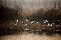 黄河入海口湿地冬季风光