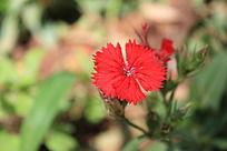漂亮的红色花卉特写