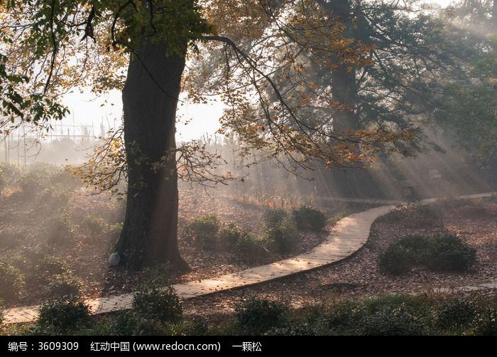 日出的阳光透过茂密的树枝