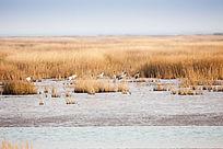 安静的冬季湿地景色