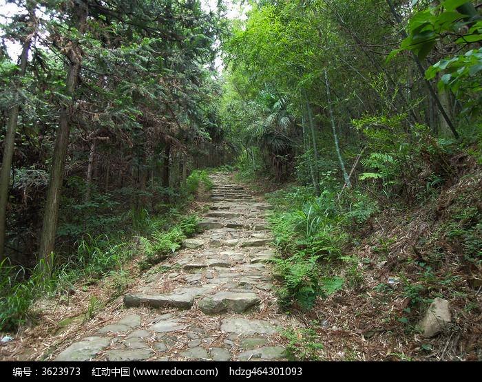 原创摄影图 自然风景 森林树林 湖南桃江浮邱寺青石板阶梯小路  请您