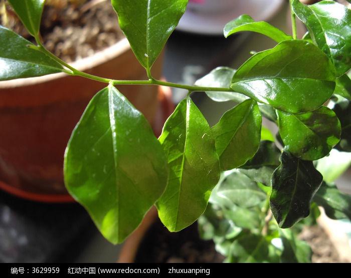 原创摄影图 动物植物 花卉花草 绿色叶子  请您分享: 红动网提供花卉