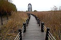 湿地芦苇 大风车