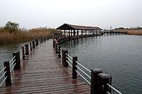 太湖湿地木栈道 小径