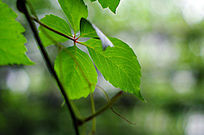植物叶片特写
