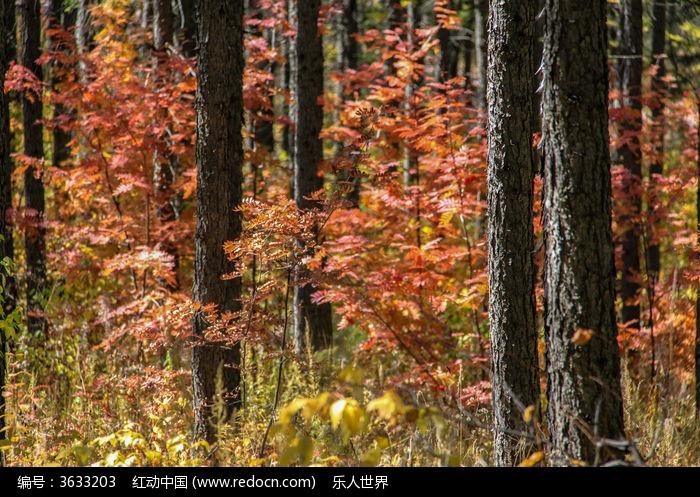 彩色的树林图片