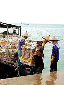 两个正从渔船搬运鱼的女人图片