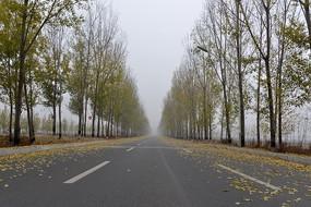 落满树叶的公路